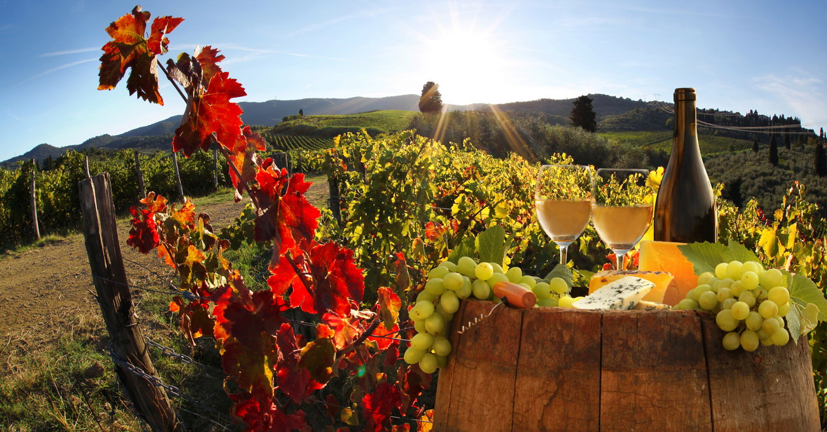NAtječaj za vinare, ulaganje u proizvodnju i marketing vina